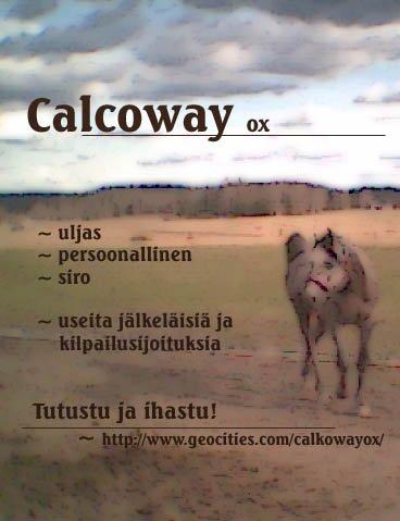 Klikkaamalla kuvaa pääset Calkon uudistetuille sivuille :)